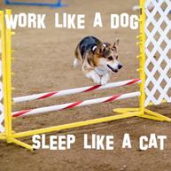 Work like a dog sleep like a cat