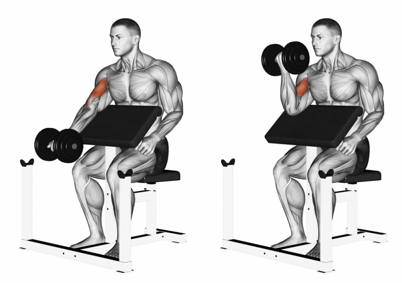 bicep curls for upper body strength